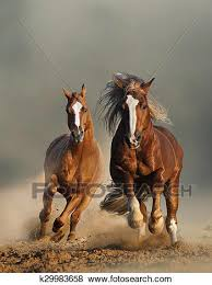 horses running. Unique Horses Picture  Two Wild Chestnut Horses Running Front View Fotosearch Search  Stock Photos To Horses Running I