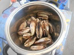 brown mussel perna perna photo glen phillips