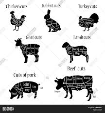 Cow Butcher Chart Butcher Chart Vector Photo Free Trial Bigstock