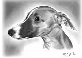 cute puppy drawings in pencil for kids. Contemporary Cute Whippet Puppy By Torsk1  To Cute Drawings In Pencil For Kids F