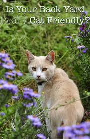 find out whether your garden is filled with cat friendly plants or whether there are