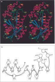 Hsd Density Conversion Chart A Stereo Ribbon Diagram Of A Monomer Of Human Estrogenic