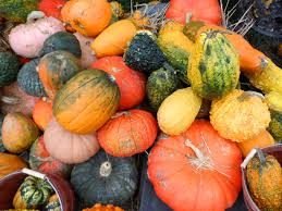 Image result for fall foods
