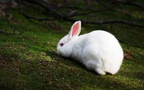 Top Beautiful And Cute Rabbit ...