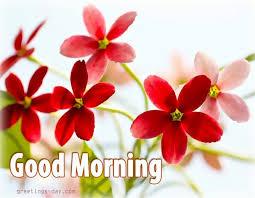Image result for goodmorning images