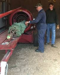 Local tree farms keep holiday spirit, tradition alive and merry - Huron  Daily Tribune