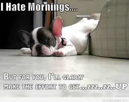 Good Morning Monday Photos In Funny Funny Goodmorning Monday Dog Picture With Quote 10