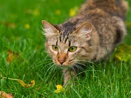 how to keep cats out of the garden. Hunting Cat How To Keep Cats Out Of The Garden N