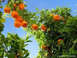 161 Best Iran  Georgia  Armenia  Azerbaijan Tours Images On Iranian Fruit Trees