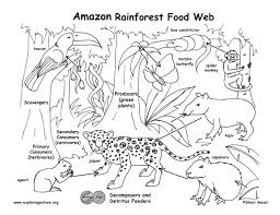 0e7eb8956eba1cb49f78954889116347 rainforest food chain rainforest biome 25 best ideas about rainforest food web on pinterest rainforest on energy storage and transfer model worksheet 1b answers