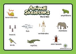 Year 3 Animals Including Humans Archives Grammarsaurus