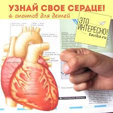Детям о сердце экспериментов Это интересно  опыты и эксперименты по биологии для детей Изучаем сердце