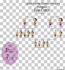 Pedigree Chart Png Images Pedigree Chart Clipart Free Download