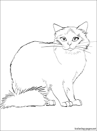 Small Picture Birman cat coloring page Coloring pages