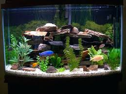 fish tank decoration ideas is cool small decorations plastic funky tanks for goldfish funky fish tank
