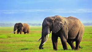 Full HD Wallpapers 1080P Elephant (Page ...