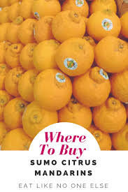 Mandarin Tangerines Sumo Citrus Fudge
