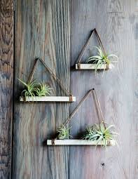 Air Plant Display Easy Diy Air Plant Trapezes Plants Air Plants And Gardens