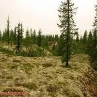 Природные зоны Западной Сибири