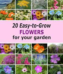 The blooms are the deep, dark brown color of a chocolate bar, and they're highlighted with golden tips. 20 Easy To Grow Flowers For Garden Colour Dengarden