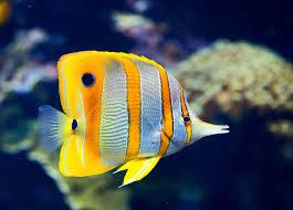 Aquarium Maintenance Tips And Fish Care Guidelines