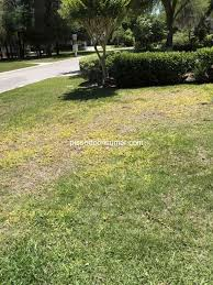 trugreen lawn service review 287926