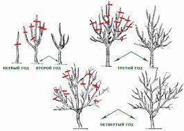 Caring For Fruit Trees In The Summer  RedfinPrune Fruit Tree