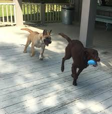 in the short term take paws moves s into foster and forever homes as quickly as possible but there are always more dogs in need than there are open