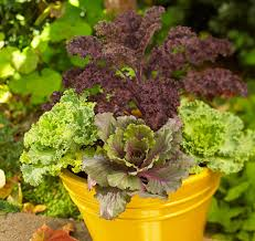29 Best Container Gardens For Autumn Images On Pinterest  Fall Container Garden Ideas For Fall