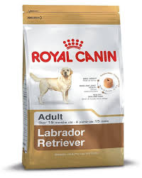 Royal Canin Diet Chart Buy Royal Canin Adult Labrador Dog Food 12 Kg Online At