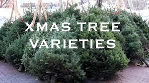 Centennial Fir Artificial Christmas Tree  Balsam HillTypes Of Fir Christmas Trees