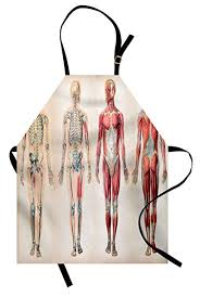Ambesonne Human Anatomy Apron Vintage Chart Of Body Front Back Skeleton And Muscle System Bone Mass Graphic Unisex Kitchen Bib Apron With Adjustable