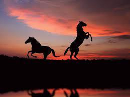 48+] Horse Desktop Wallpaper Themes on ...