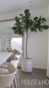 room plants x: large indoor plants make it easy to create your very own indoor jungle heres