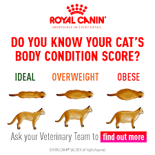 Body Condition Scoring The Healthy Pet Club