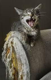 Cat Scratching – vet n pet DIRECT Blog