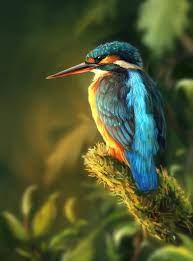 summer bird | Bird, Pictures of jesus christ, Color of life