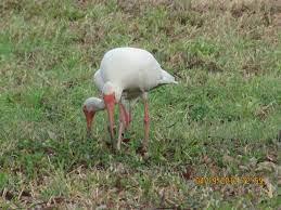Ingrid Birds in my yard | Birds, Bird, Animals