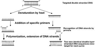 Sgugenetics Methods Of Pathogen Identification Using Molecular Methods