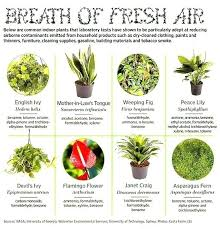 indoor plants with names indoor plants with names house plants names common indoor plants