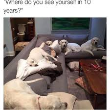 ultra doggo where do you yourself in 10 years just next