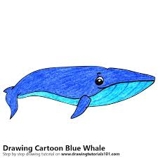 how to draw a cartoon blue whale