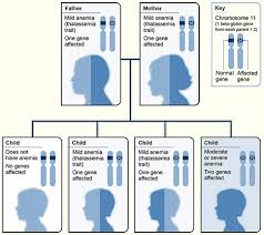 Beta Thalassemia Wikipedia