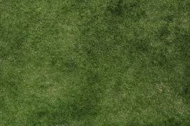 Grass Allergies in Dogs - Symptoms, Causes, Diagnosis, Treatment ...