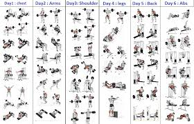 Back Exercises Gym Chart Workout Routine Chart Margarethaydon Com