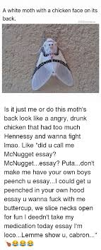 ✅ best memes about moth moth memes drunk hennessy and lmao a white moth a chicken face on its