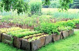 stone raised garden beds raised gardening beds for raised vegetable garden plans stone raised beds