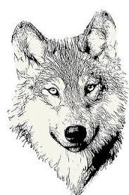 Více Než 100 Obrázků Na Téma Vlk Hlava A Vlk Zdarma Pixabay