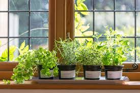 indoor gardening. Perfect Gardening 21 Best Indoor Gardening Ideas For Beginners And Advanced Gardeners 2018 For A