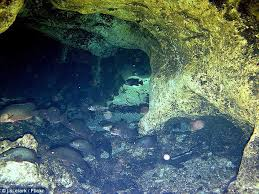 It's like dropping down into a whole new world as you swim through giant passageways that have taken tens of thousands of years to form. kagan schott also cautioned that training and experience is paramount. Why Did Patrick Peacock And Chris Rittenmeyer Eagle Nest Cave Divers Ignore Death Warnings
